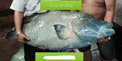 Cá sống cả trăm mét dưới đáy biển, giá 2,3 triệu/kg - Ảnh 1.