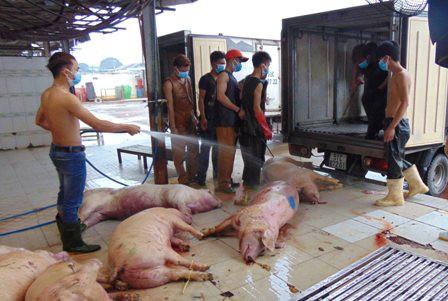 Sốc: 100% mẫu thịt heo, gà, vịt bị nhiễm khuẩn gây viêm não - Ảnh 1.