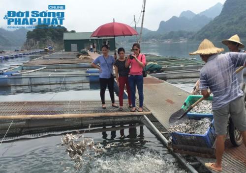 Thu chục tỷ mỗi năm nhờ nuôi cá tại lòng hồ thủy điện - Ảnh 1.