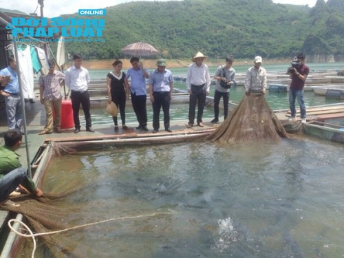 Thu chục tỷ mỗi năm nhờ nuôi cá tại lòng hồ thủy điện - Ảnh 2.