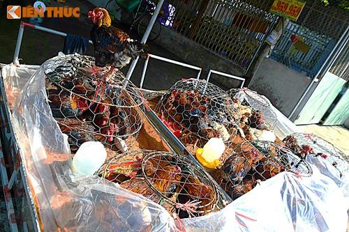 Gà Đông Tảo giá rẻ bán đầy đường, phục vụ khách ăn Tết dương - Ảnh 1.
