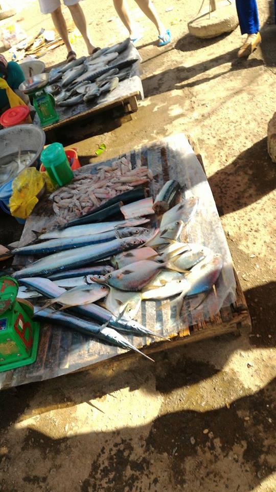 Nhiều loại cá ngon