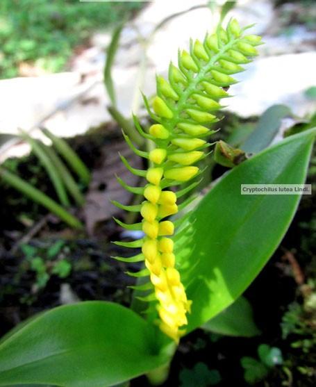 Chiêm ngưỡng hoa phong lan rừng Sa Pa - Ảnh 14.