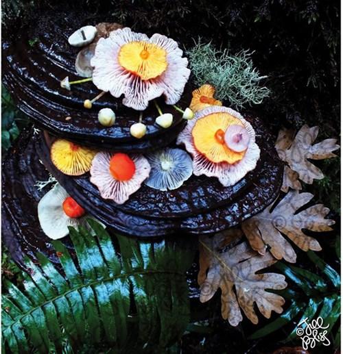 Những cây nấm rực rỡ sắc màu đẹp đến... khó tin - Ảnh 15.