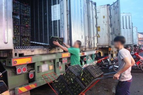 Hằng ngày, một lượng lớn rau quả Trung Quốc được vận chuyển về chợ đầu mối Thủ Đức - Ảnh: C.TRUNG