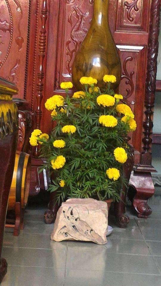 Hoa vạn thọ không thể thiếu trong Tết cổ truyền