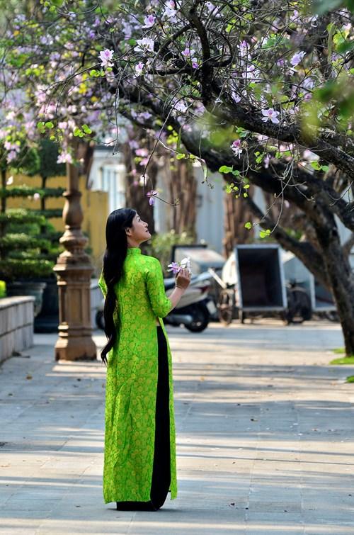 Hoa ban không còn xa lạ với người dân Thủ đô. Trên các tuyến đường Bắc Sơn, Thanh Niên, ven hồ Hoàn Kiếm,... cũng được trồng khá nhiều