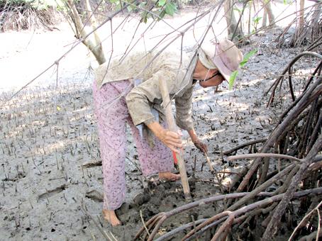 Cái thuổng và cái móc là 2 dụng cụ cần thiết để đào chem chép.