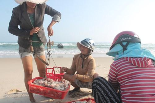 Thương lái tìm về thu mua cá khoai và các hải sản khác ngay tại bờ biển làng Bình An.