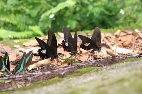 Mê hồn thiên đường bướm ở Đắk Lắk - Ảnh 1.