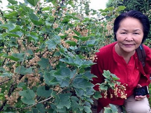 Trái cây ngoại siêu đắt tại Việt Nam là cây dại ở nước ngoài? - Ảnh 3.
