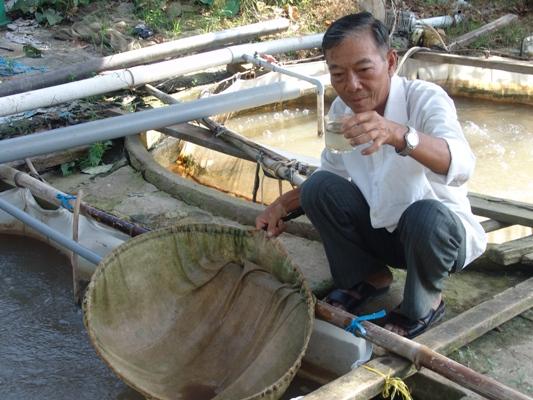 Tràn ngập cá linh giả ăn theo con nước nổi - Ảnh 1.