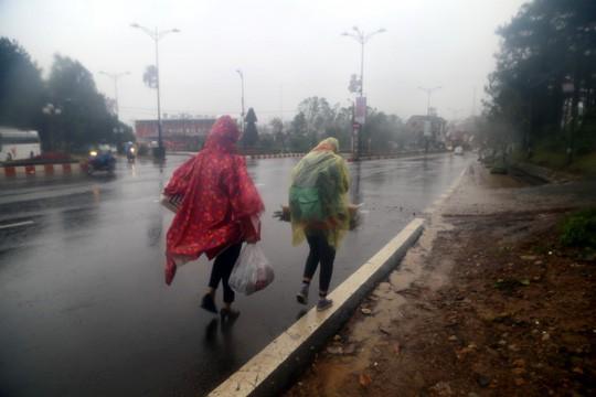 Lâm Đồng: 2 người chết, nhiều nơi bị cô lập do bão - Ảnh 3.