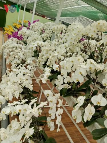 Ngắm ngàn hoa đua sắc tại làng hoa nổi tiếng ở Đà Lạt - Ảnh 3.