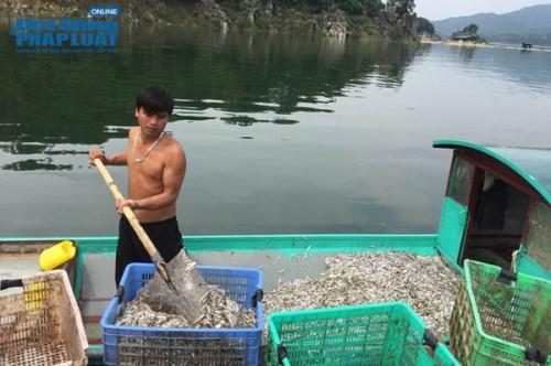 Thu chục tỷ mỗi năm nhờ nuôi cá tại lòng hồ thủy điện - Ảnh 3.
