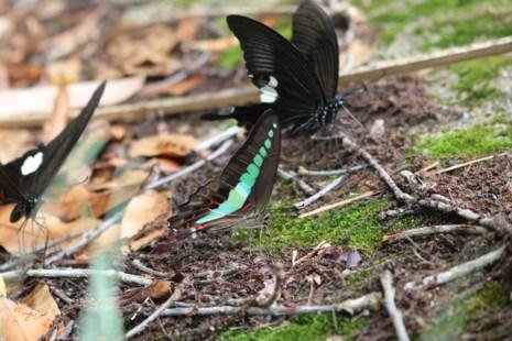 Mê hồn thiên đường bướm ở Đắk Lắk - Ảnh 7.