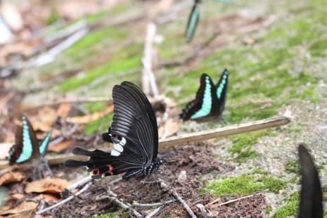 Mê hồn thiên đường bướm ở Đắk Lắk - Ảnh 8.