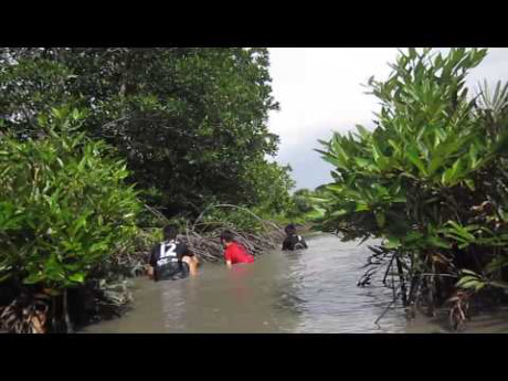 Theo chia sẻ của nhiều người trong nghề, cua thường di chuyển từ biển vào cửa sông rồi tìm tới những khu vực bùn lầy, đất ẩm ướt trong rừng để cư trú