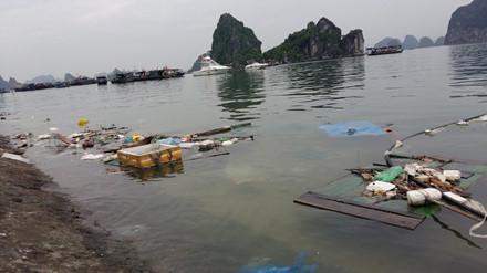 Kinh hoàng rác bủa vây vịnh Hạ Long - Ảnh 6.