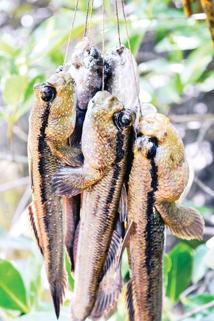 Cá thòi lòi - Dị hợm, kỳ lạ - Ảnh 4.