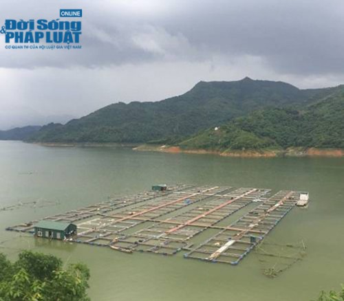 Thu chục tỷ mỗi năm nhờ nuôi cá tại lòng hồ thủy điện - Ảnh 4.