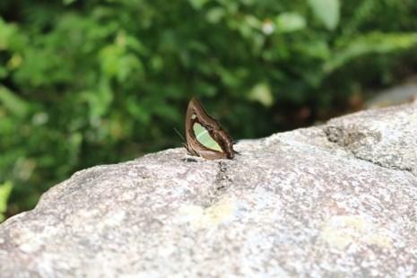 Mê hồn thiên đường bướm ở Đắk Lắk - Ảnh 11.