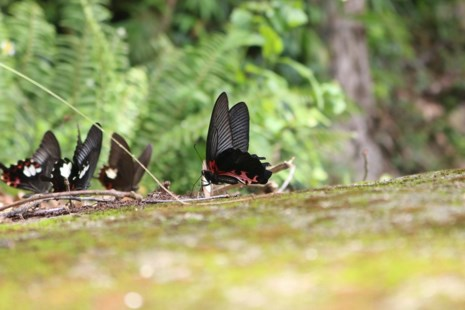 Mê hồn thiên đường bướm ở Đắk Lắk - Ảnh 13.