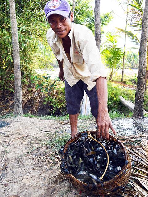 Sau đó được rửa sạch để chuẩn bị lựa ra các loại cá khác nhau