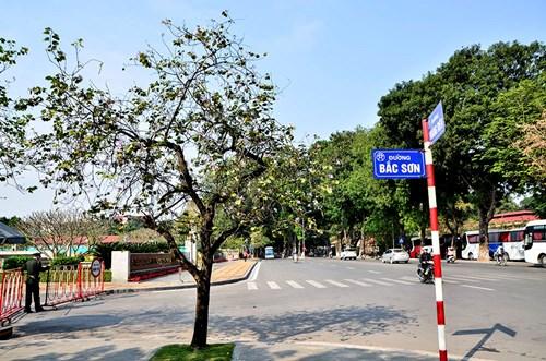 Mùa hoa ban nở thì đường Bắc Sơn được nhiều người biết đến hơn do nơi đây có hàng chục cây hoa cùng bung nở