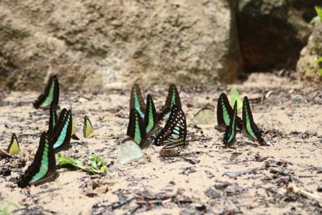 Mê hồn thiên đường bướm ở Đắk Lắk - Ảnh 2.