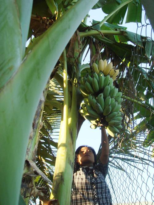 Vườn cây ăn trái 4 tỉ đồng như công viên của bà mẹ 2 con tại TP HCM - Ảnh 6.