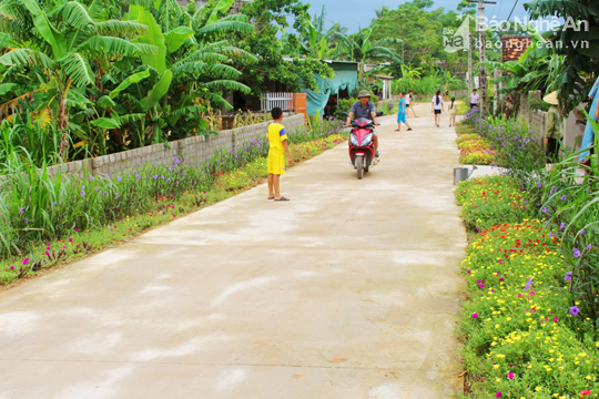 Đẹp ngỡ ngàng con đường hoa ở miền quê Nghệ An - Ảnh 7.