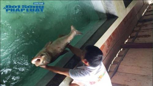 Thu chục tỷ mỗi năm nhờ nuôi cá tại lòng hồ thủy điện - Ảnh 7.