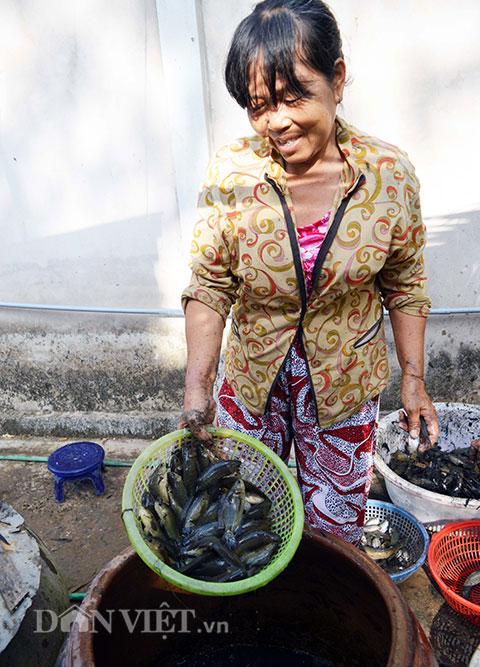 Cá được đựng trong các lu, chuẩn bị đem ra chợ bán