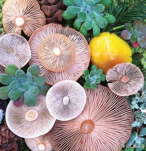 Những cây nấm rực rỡ sắc màu đẹp đến... khó tin - Ảnh 8.