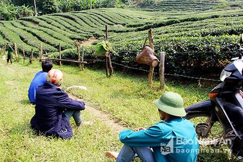 Săn ong giống ở miền Tây xứ Nghệ hồi hộp, li kỳ như đấu trường 100 - Ảnh 9.
