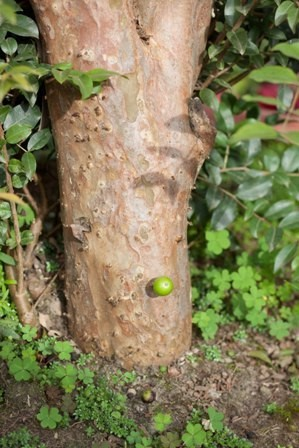 Nho thân gỗ có gì đặc biệt mà hấp dẫn nhiều người đến vậy? - Ảnh 7.