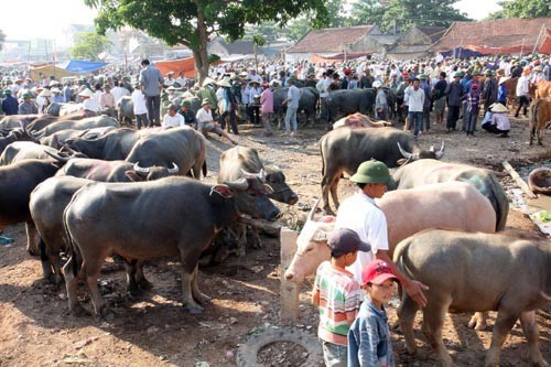 Những khu chợ chỉ bán một mặt hàng ở Việt Nam - Ảnh 8.