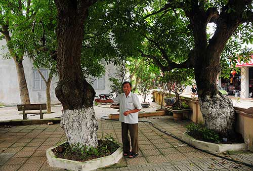 Bí mật về 4 cụ cây 700 tuổi ở Đồng Tâm - Ảnh 3.
