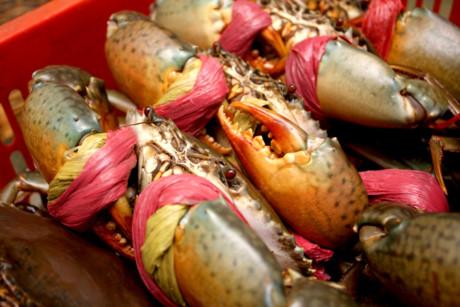 Cua biển trong rừng ngập mặn thịt chắc thơm ngon được thị trường ưa chuộng nên giá khá đắt từ 200.000 - 300.000 đồng/kg. Bình quân những ngày thuận lợi, mỗi người dân làm nghề này có thể bắt được từ 3-4 kg, thu nhập có khi đến tiền triệu mỗi ngày