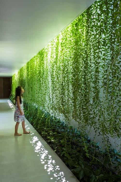 Xu hướng tạo vườn trong nhà trong thiết kế nhà ở - Ảnh 10.