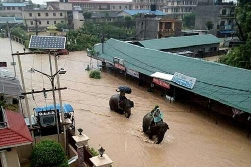 Nepal: Lũ lụt nghiêm trọng, người dân sơ tán bằng voi - Ảnh 1.