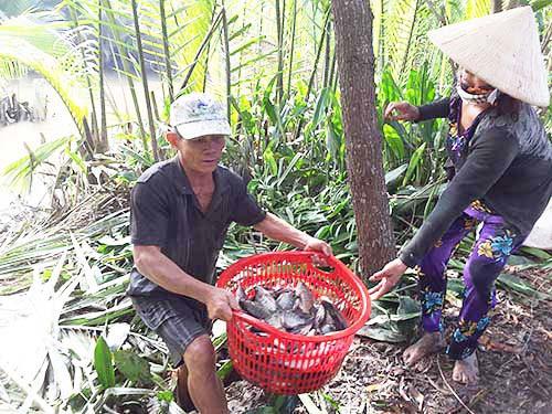 Thu hoạch cá ở Đa Phước - Ảnh 4.