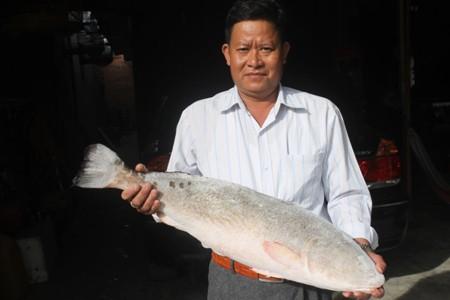 Khánh Hòa: Cặp cá sủ vàng, giá 1,5 tỷ đồng chưa bán - Ảnh 4.