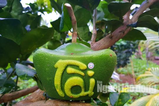 """Ngắm 2 loại trái cây tạo hình """"độc lạ"""" đón Tết Nguyên đán 2019 - Ảnh 1."""