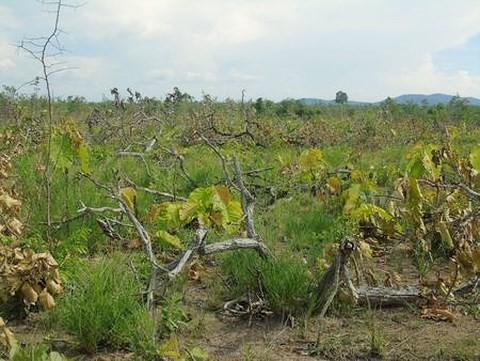 Khởi tố 1 người nhận là nhà báo tham gia phá rừng - Ảnh 1.