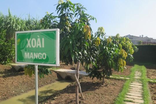 Ajinomoto Việt Nam phát triển kinh doanh trên chu trình sinh học - Ảnh 7.