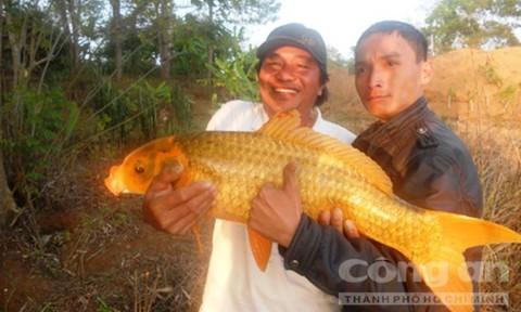 Săn cá khủng, hiếm và vật thể lạ ở Biển Hồ - Ảnh 3.