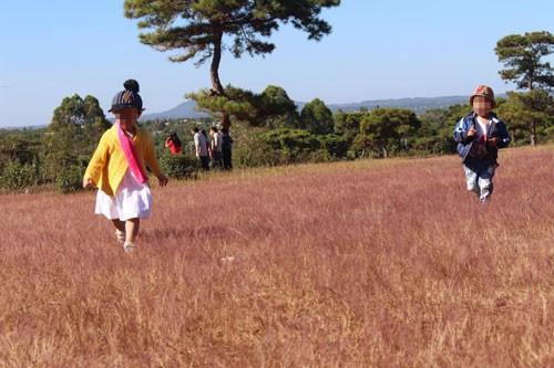 Gia Lai giao gần 200 ha rừng thông cho FLC làm sân golf - Ảnh 1.