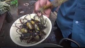 Rùng mình món nhện rừng đặc sản ở Bình Thuận - Ảnh 7.